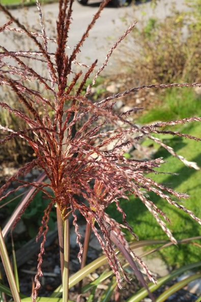 Prydnadsgräs-liknar-garn