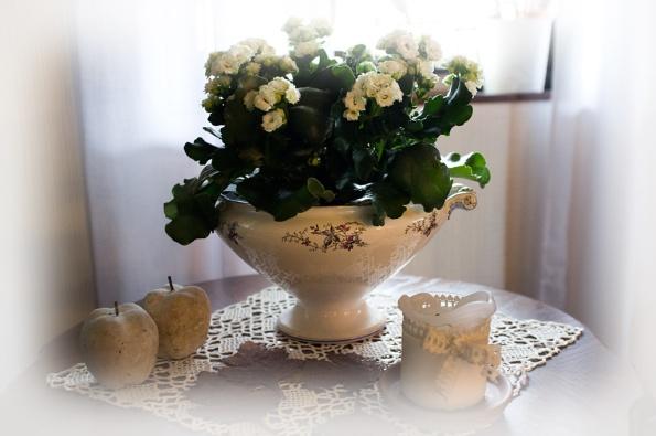 Vit-blomma-i-soppterrin-soft