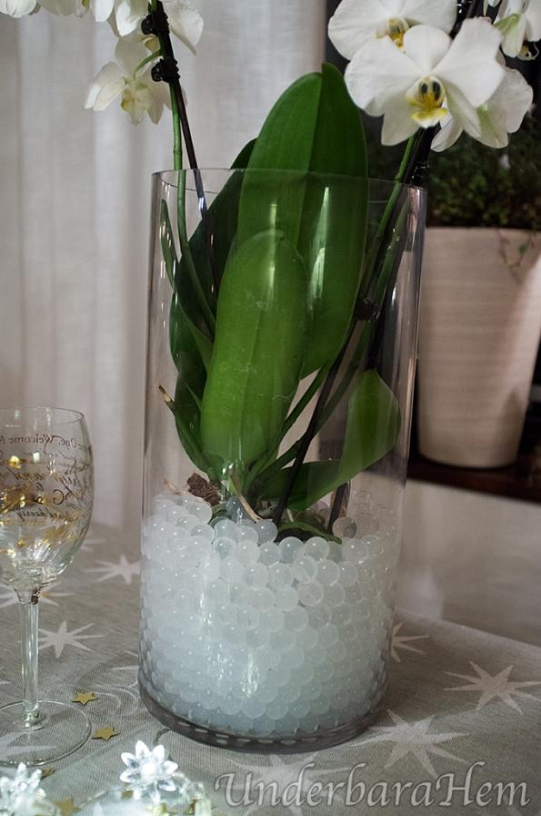 Vattenpärlor-och-orkide