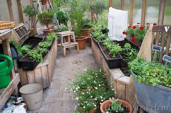 Krukplanteringar-i-växthuset