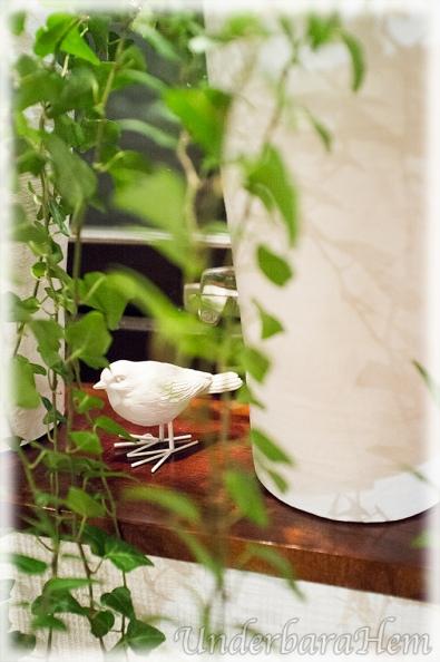 Fågel-i-murgröna
