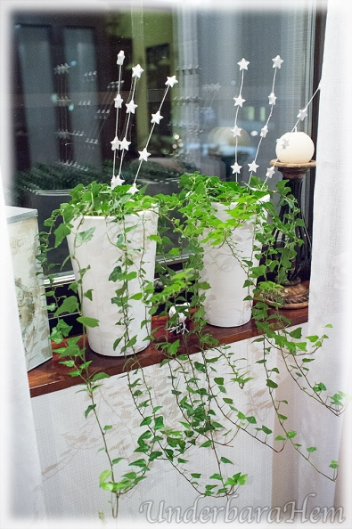 Murgröna-i-vardagsrum