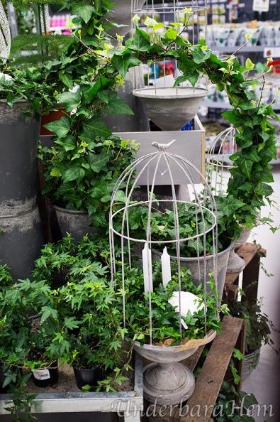 Blomsterlandet-murgröna-i-fågelbur