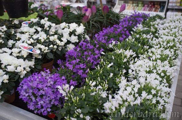Cramers-vita-blommor