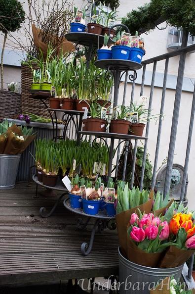 Blomstertrappa-GBG-Floratös-och-krukamor