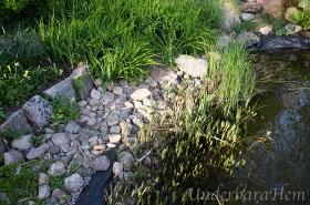 Dammen-växtlighet