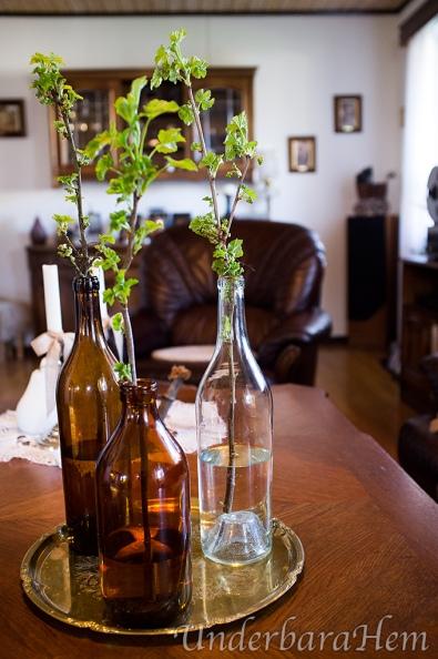 Flaskor-med-vinbärskvistar