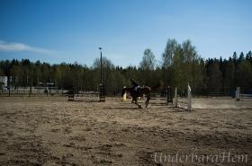 Hästhoppning-April-2014