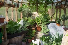 Fullt-av-blommor-i-växthuset