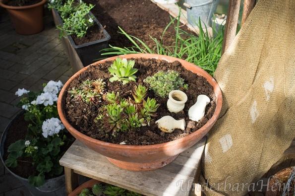 Nya-fetbladsväxter