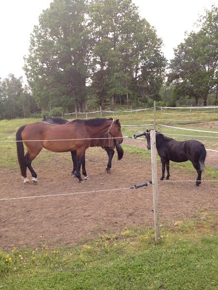 Tre-hästar