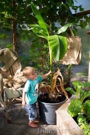 Millian-och-bananplanta