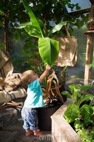 Millian-och-stor-bananplanta