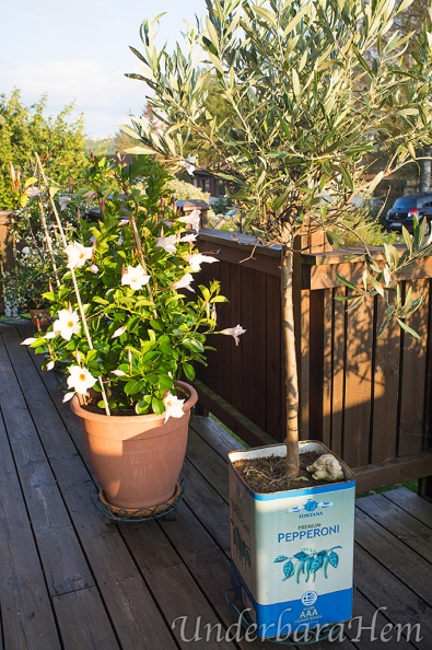 Vit-blomma-på-altan