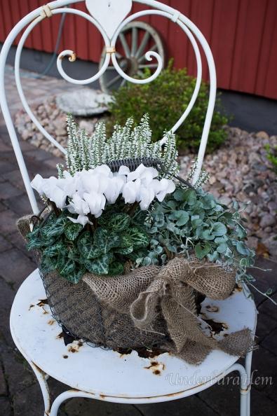 Höstplantering-på-vit-stol