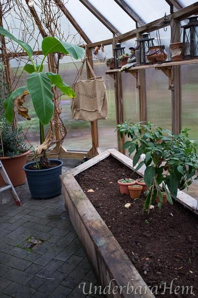 Höststädning-i-växthuset2