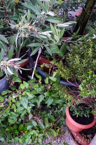 Grönt-i-växthuset-sista-jan-2015