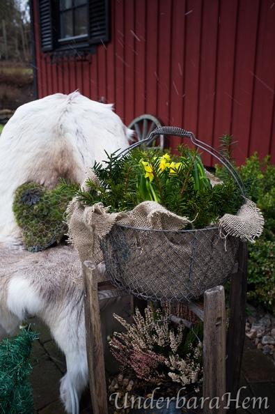 Påskliljor-i-korg-2015