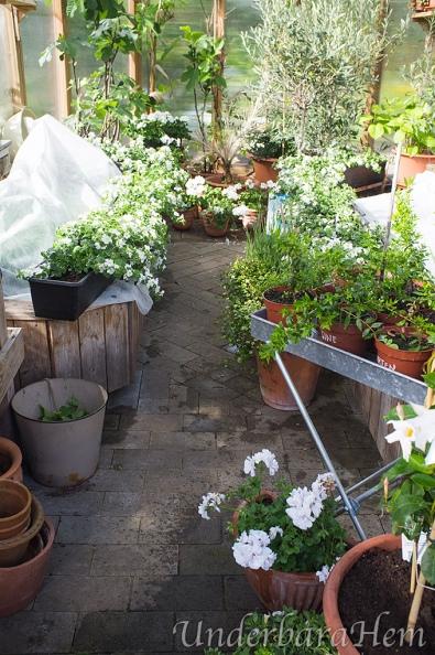 Fullt-i-växthuset