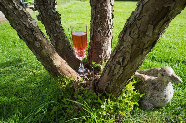Rosé-vin-i-träd-2