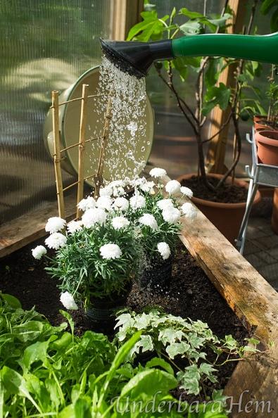 Blomma-i-vattenstråle-2