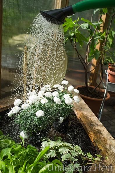 Blomma-i-vattenstråle