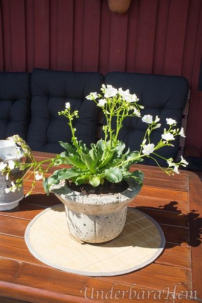 Blomma-på-altanbord