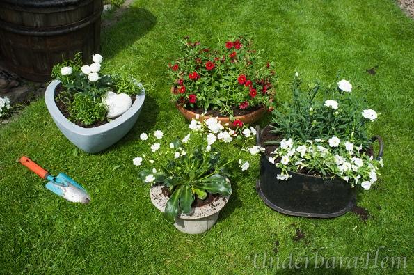 Blommorna-planterade