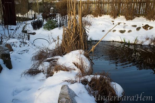 Snö-vid-dammen-dec-2015
