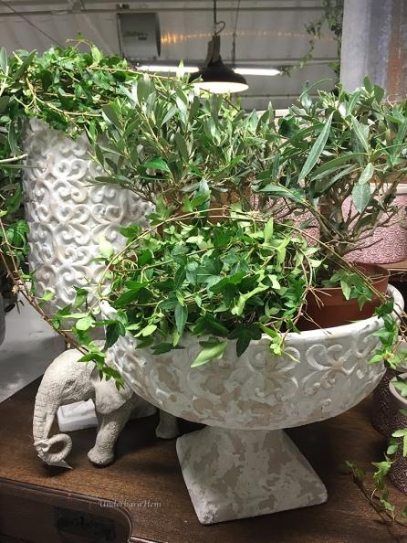 Elefant-och-murgröna