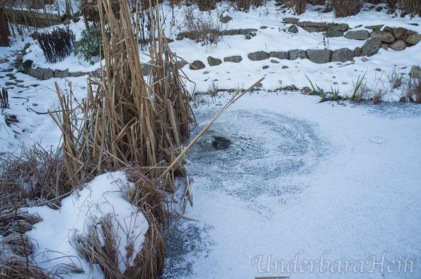 Hål-i-isen-jan-2015