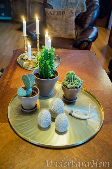 Kaktus-på-bricka