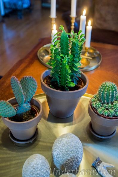 Kaktusar-på-bricka