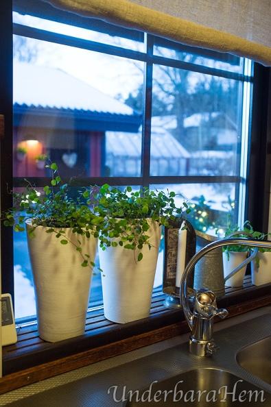 Nya-blommor-i-köksfönstret