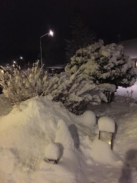 Snö-2016