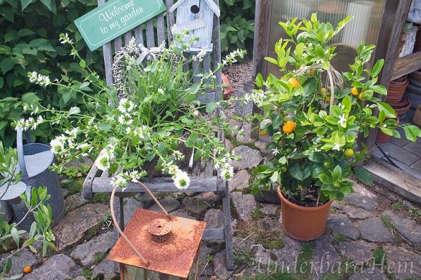 Blandade-växter