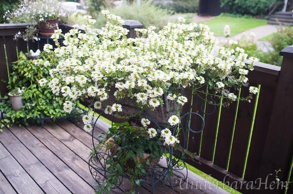 blommor-pa-altan