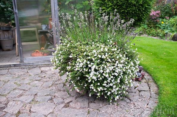 blommor-vid-vaxthus