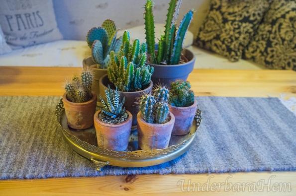 kaktuskrukor