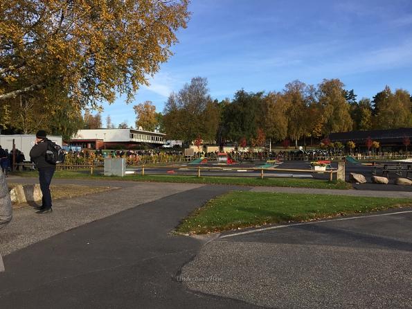 ko-till-djurparken-2016