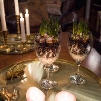 Dessa vackra Hyacinter!